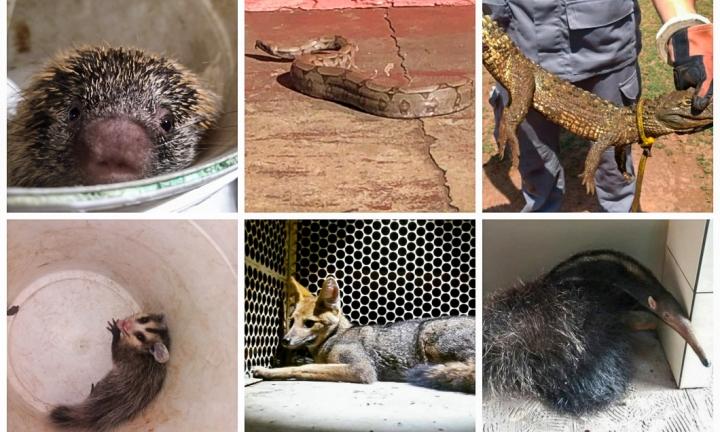 Animais silvestres são vistos com frequência em Avaré e cidades da região