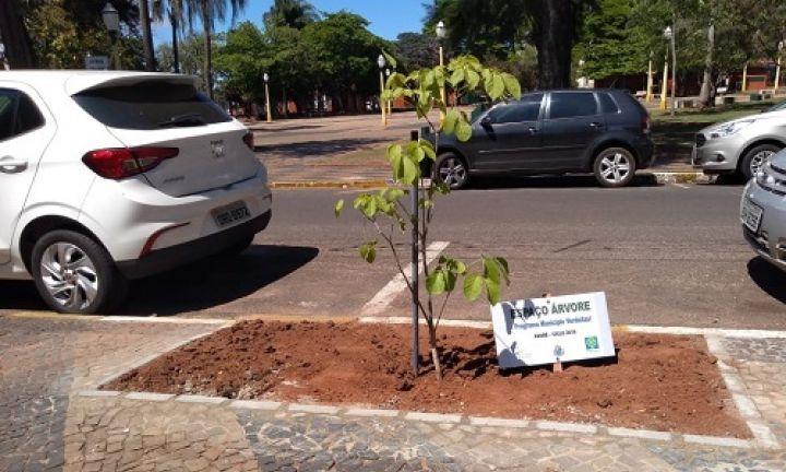 Secretaria disponibiliza cartilha online sobre arborização urbana