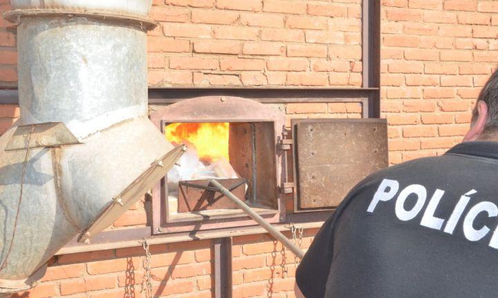 Polícia Civil incinera mais de meia tonelada de maconha