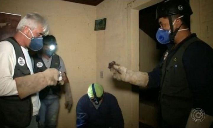 Região de Avaré tem mutirão pra combater transmissão da raiva animal