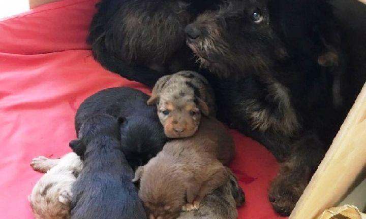 Bombeiros resgatam filhotes de cães presos em prédio do antigo Fórum