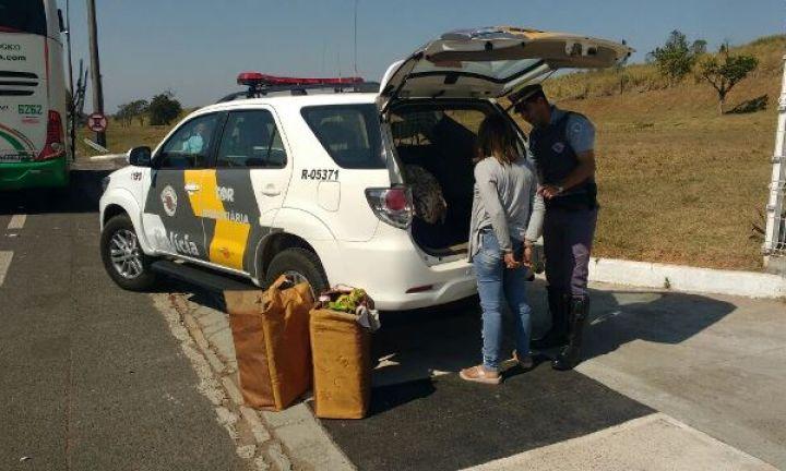 TOR prende boliviana com mais de 15 kg de cocaína pura