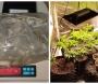 Polícia Civil prende homem que cultivava maconha dentro de casa