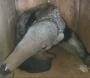 Tamanduá fêmea é atropelada, morre e filhote é resgatado tentando mamar