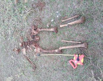 Encontro de ossada abre caminho para elucidar crimes de homicídio e ocultação de cadáver