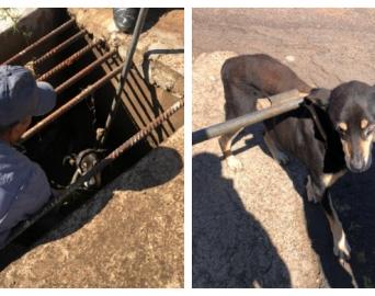 Bombeiros resgatam cachorro que estava em galeria de águas pluviais