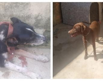 Dois cachorros em situação de abandono são resgatados pela Polícia Civil