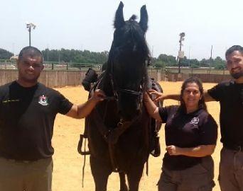 Comandante da Polícia Montada de Avaré visita base da cavalaria de Israel