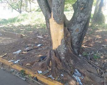 Adolescente de 15 anos morre ao bater moto em árvore em Avaré