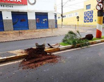 Câmeras flagram ação de vândalo em Avaré