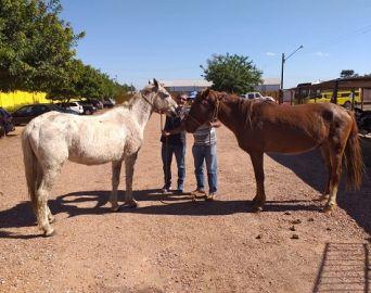 Secretaria da Agricultura atendeu mais de 200 ocorrências envolvendo animais