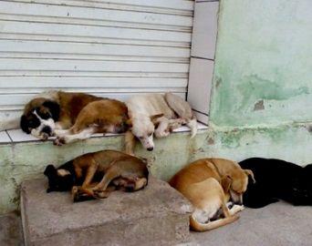 Casos de abandono de animais aumentam consideravelmente em Avaré