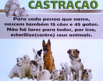 Ernesto Albuquerque pede audiência pública para tratar da castração de animais