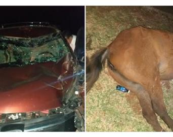 Animal solto em vicinal causa acidente em Avaré