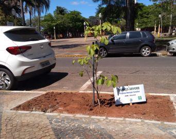 Lei estabelece parâmetros para plantio de árvores em calçadas