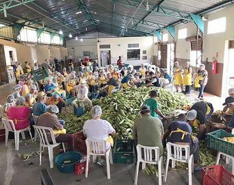 32ª Festa do Milho do Bairro Brabância tem início no dia 8 de março