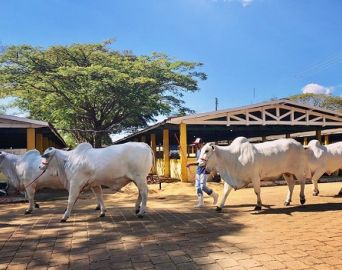 Exponel reúne mais de 250 animais no Parque de Exposições