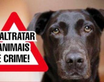Prefeitura passa a atender denúncias de maus tratos a animais