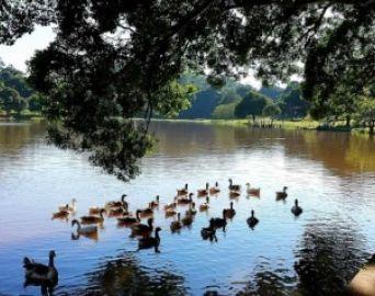 Cultura leva diversas atrações ao Horto Florestal
