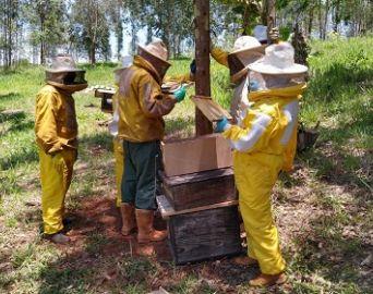 Associação ministra curso de produção de abelhas rainhas