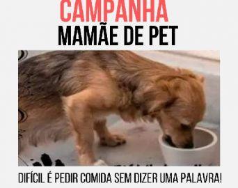 Campanha Mamãe de Pet auxilia pessoas que cuidam de animais em Avaré