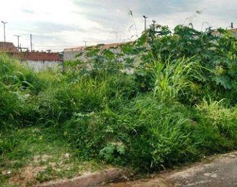 Terreno com mato alto e sem calçada pode gerar multa ao proprietário