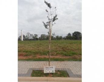 Espaço-Árvore estabelece critérios para plantio de espécies em calçadas