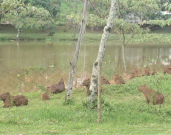 Horto Florestal: confira as medidas preventivas contra a Febre Maculosa