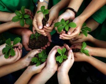 Crianças de Avaré farão plantio de mudas nativas