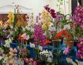 APAE realiza 1ª Feira de Orquídeas, Plantas Ornamentais e Frutíferas
