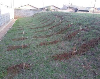 Parceria cria horta orgânica em unidade de ensino infantil