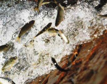 Pesca segue proibida nos rios da região até o fim de fevereiro