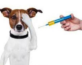 Vacinação contra a raiva animal será em setembro