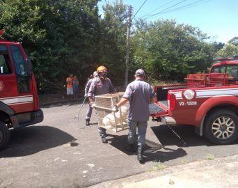Bombeiros resgatam animais vítimas de maus-tratos em Avaré