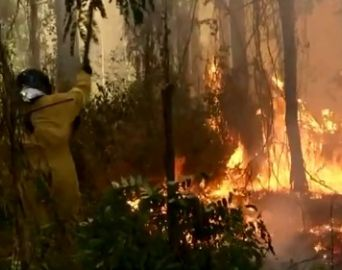 Incêndio atinge área de vegetação no horto florestal de Avaré