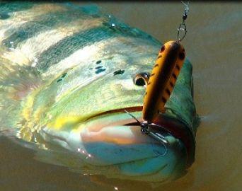 Torneio de Pesca Esportiva agitará o Camping Municipal