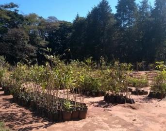 Meio Ambiente promove adequações no Viveiro Municipal